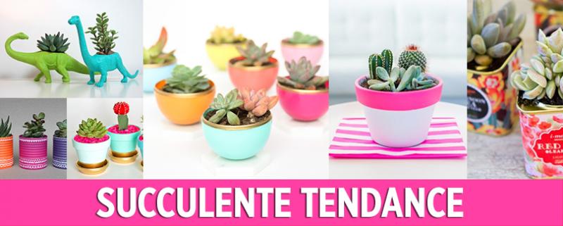 Succulente Tendance